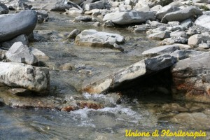 Rock Water, Fiori di Bach