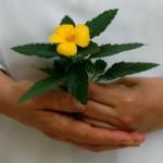 maneggiare ii fiori