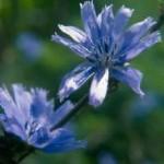 Fotografie dei 38 fiori di Bach - i CD della Dottoressa Gabriele Krause