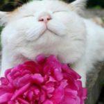 gatto-e-fiori